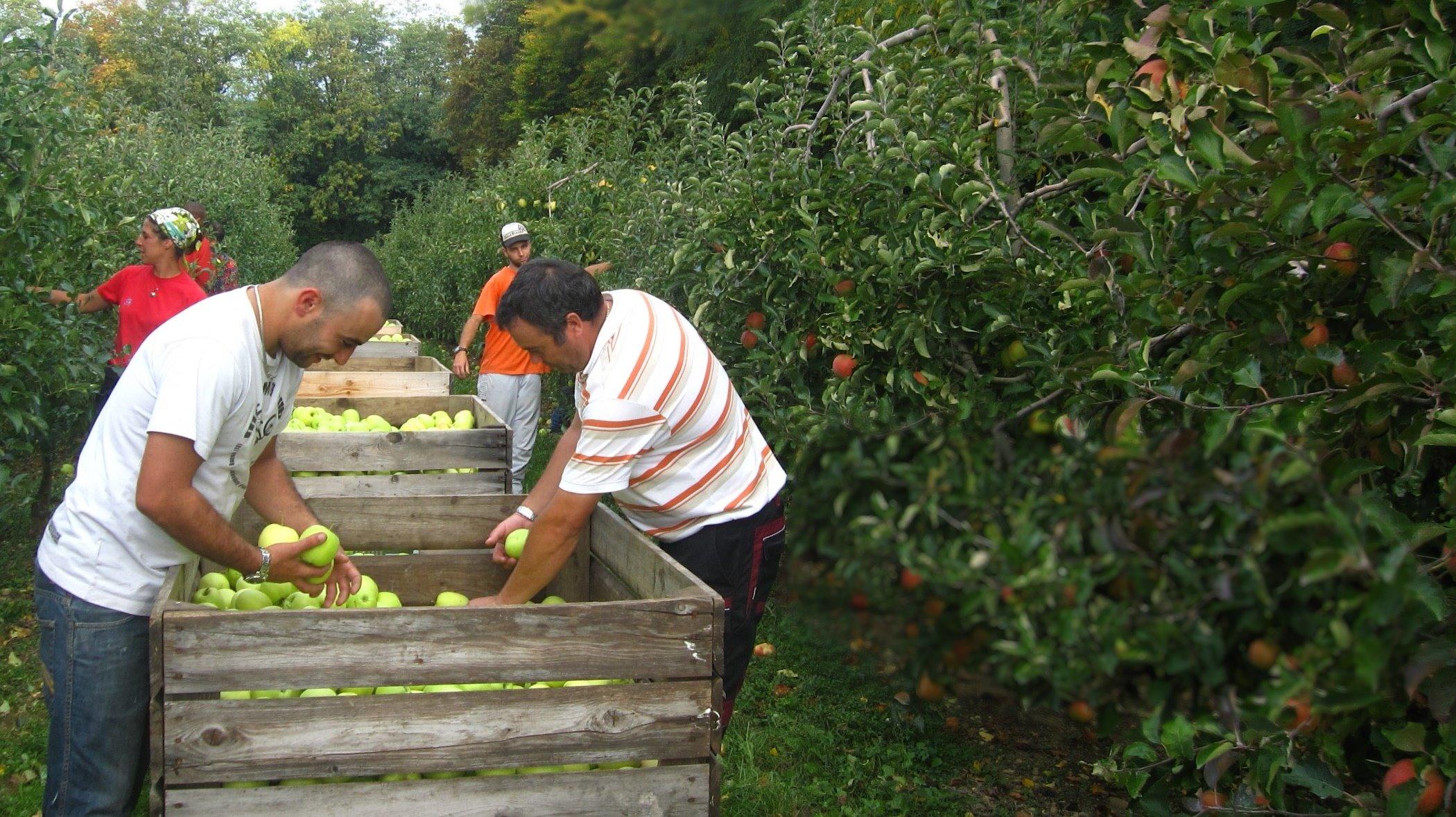 Accueil - Ou trouver des caisses u00e0 pommes ...